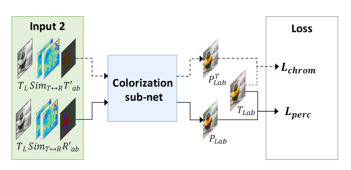 The two branches in the colorization network