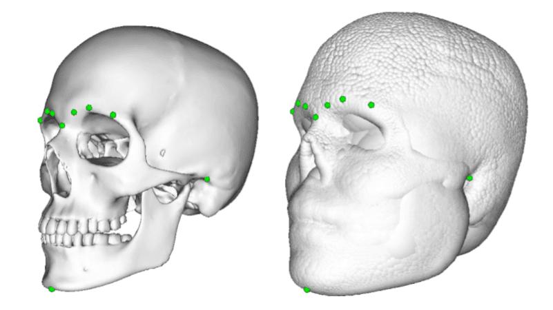 реконструкция лица по форме черепа
