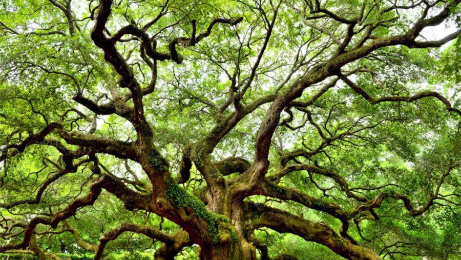 дерево решений