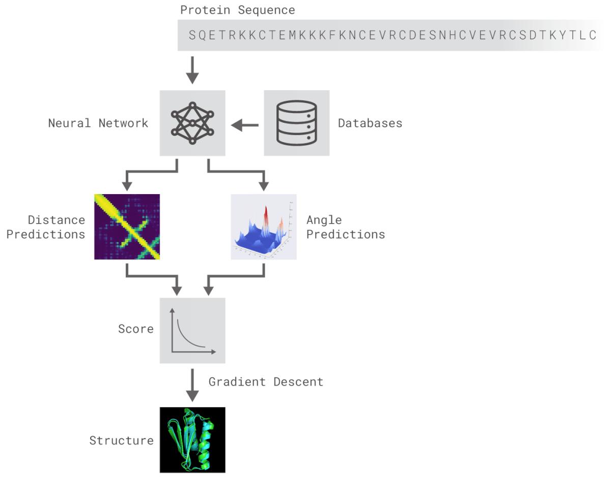 Схема Alphafold