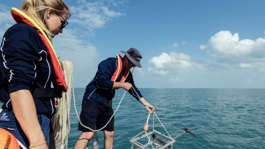 отслеживание популяции рыбы